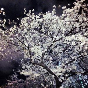 2014_yozakura_ebisu